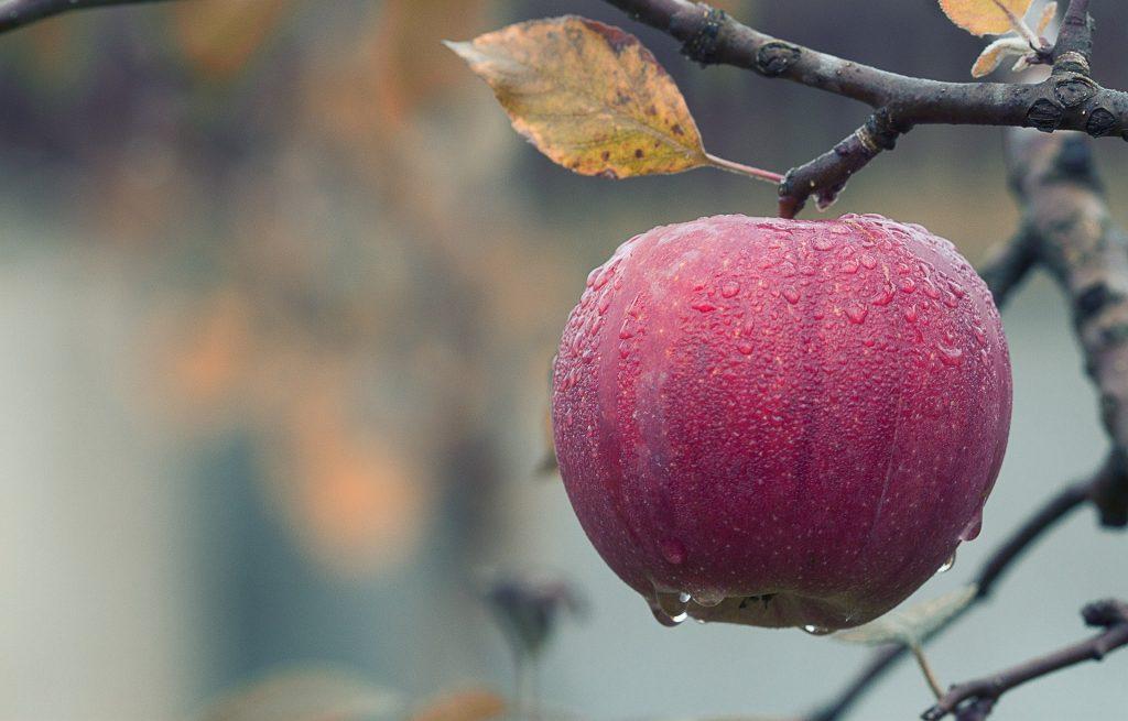 Kisah Sepotong Apel, Tsabit bin Nu'man